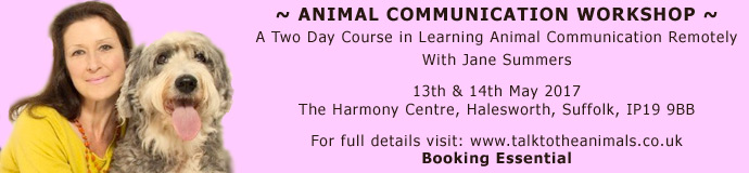 Two Day Animal Communication Workshop