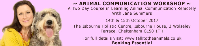 Two Day Animal Communication Workshop- Cheltenham, Glos.